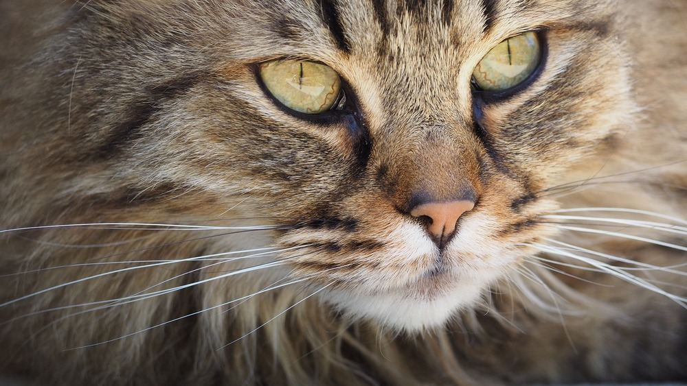 katze-cat-1393075_1920